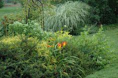 Cotoneaster Horizontalis and Garden Mates in A Garden For All by Kathy Diemer http://agardenforall.com