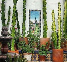 סוקולנטים וקקטוסים, צמחים טרופיים ודקלים למכביר ב-facethefoliage