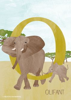 De O is van olifant. Een prachtig beest, vind ik. Het grootste dier op land. Wist je dat een mannetje wel 7000 kg kan worden? Elke week een illustratie uit het alfabet voor kinderen: revista-ontwerp.nl