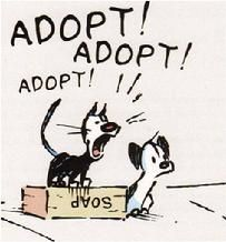 MUTTS - Patrick McDonnell -- I love this comic, especially since it promotes shelter pet adoptions!