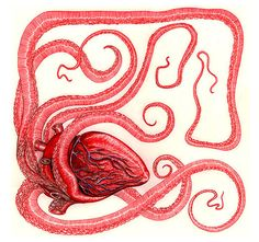Heartopus