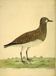 v. 1 - A natural history of birds : - Biodiversity Heritage Library