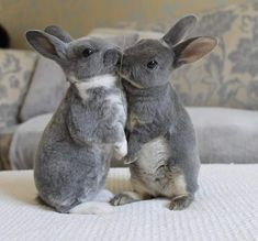 Happy Animals, Animals And Pets, Cute Animals, Bunny Rescue, Le Terrier, Beautiful Rabbit, Rabbit Photos, Cute Baby Bunnies, Some Bunny Loves You