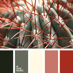 алый, бордовый, желтый, зеленый, красный, оттенки зеленого, оттенки кирпично-красного, оттенки темно-зеленого, подбор цвета в интерьере, светло-желтый, серо-зеленый, тёмно-зелёный, цвет мака, цвет мякоти грейпфрута.