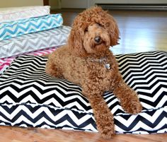 New Dog Bed pattern.  Recycle a comforter for the filling, it's comphy, cheap, washable and good for the environment. Terri Staats Sweet Treasures