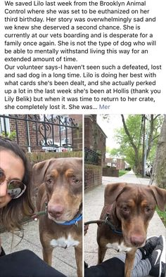 5/9/17 PLEASE HELP LILO FIND HER FOREVER ❤️ THIS IS HEARTBREAKING ! /ij