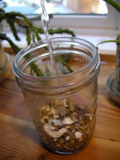 Soothing Marshmallow & Marshmallow Infusion - HerbMentor