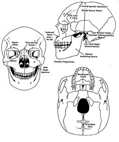 Discerning race from the skull - African ancestry (Forensic Anthropology)