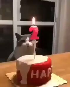 23 Ideas For Birthday Humor Cats Kittens Cute Funny Animals, Cute Baby Animals, Cute Cats, Funny Dogs, Happy Animals, Cute Animal Videos, Funny Animal Pictures, Dog Pictures, Beautiful Cats