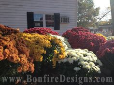 Fall Flowers So enjoying the view while I can!
