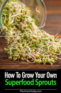 Have to ever tried to grow sprouts in a jar? You'll be surprised to find out how easy it is. It doesn't take much time or space in your home. [LEARN MORE]