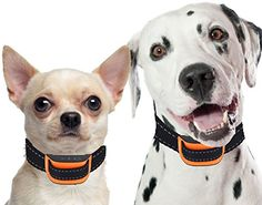 Bark Collar by Our K9. Mid Strength Vibration Bark Control Collar, Sound & Vibration Correction, No Bark Collar for Small/Med Dog. Dog bark Collar and Training Collar. With Bark Collar Batteries.