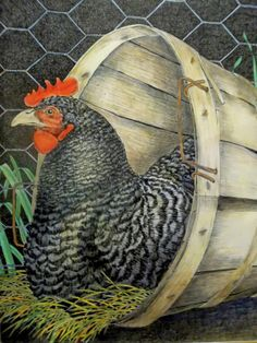 3 Best Egg Laying Chickens For Your Backyard – Chicken In The Shadows Best Egg Laying Chickens, Raising Backyard Chickens, Leghorn Chickens, Chickens And Roosters, Rooster Painting, Rooster Art, Chicken Signs, Chicken Art, Plymouth Rock Chicken