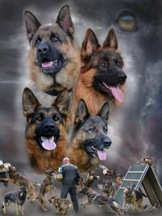 The German shepherd dog....no other like it.