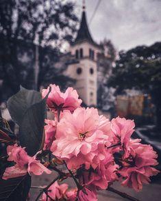 """NATI 📸 VIENNA auf Instagram: """"#topviennaphoto #amazingview #viennacity #viennagoforit #weloveaustria #wonderlustvienna #perspective #streetstyle #wienmalanders…"""" Vienna, Perspective, City, Amazing, Painting, Instagram, Perspective Photography, Painting Art, Cities"""