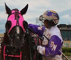 Dan Noble Harness Racing, Trotter, Dark Horse, Horse Racing, Envy, Riding Helmets, Dan, Horses, American