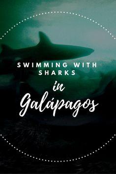 swimming with sharks Galapagos