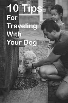 Taking your dog along can make the family vacation more fun for everyone if you plan carefully. Airline Travel, Dog Travel, Travel Tips, Dog Seat Belt, Seaside Towns, Short Trip, Whale Watching, Dog Park, Vacation Spots