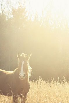 I <3 Horses so much!  I def can't wait to have one of my own. My dream animal!(: