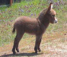 2017 Goals: Get a miniature donkey. :)