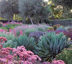 Gardening Ideas 11 Gorgeous Drought-Friendly Landscapes via - See the 11 drought-friendly landscapes are so simple to implement. Being water-conscious has never looked so good. Australian Native Garden, Australian Garden Design, Drought Tolerant Landscape, Drought Resistant Plants, Dry Garden, Garden Water, Prairie Garden, Gravel Garden, Blue Garden