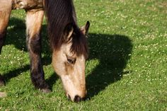 There's no shortage of beautiful horses in Noordhoek