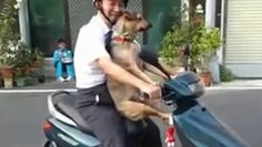 Funny Dogs on the Road Compilation
