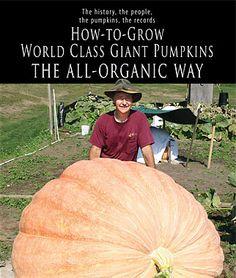 How To Grow Giant Pumpkins The definitive guide to growing world-class pumpkins organically. Giant Pumpkin, Pumpkin Farm, Gardening Supplies, Gardening Tips, Farm Gardens, Outdoor Gardens, Pumpkin Growing, Grow Pumpkins, Arizona Gardening