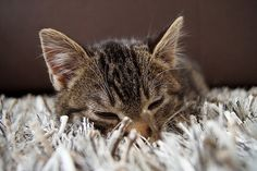 Le chat en hiver : 5 conseils pour son bien-être - Entretenir son chat - Wamiz Son Chat, Photo Chat, Cat Care Tips, All About Cats, Cat Health, Cats And Kittens, Cute Cats, Cat Lovers, Kitty