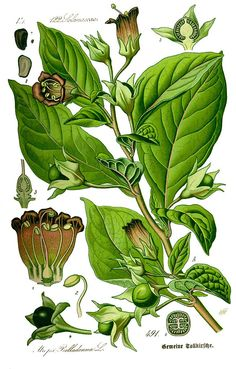 Five Important Plants in Pharmaceuticals
