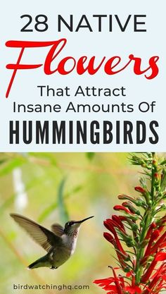Try these native flowers in your backyard and garden to attract lots of beautiful hummingbirds Tried to find easy to locate plants or can be found online Hummingbirds lov. Hummingbird Habitat, Hummingbird Nectar, Hummingbird Flowers, Hummingbird Garden, Hummingbird Meaning, Hummingbird Photos, Hummingbird Food, Easy To Grow Flowers, Growing Flowers