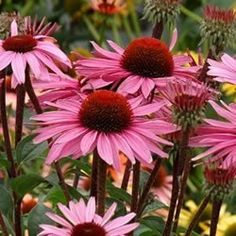 Best Perennials for Wisconsin and Midwest climates