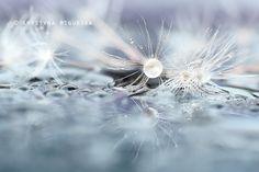 Micro World by Krystyna Wigurska on 500px