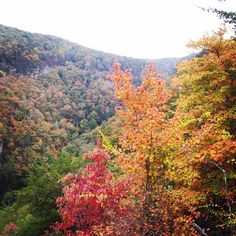 Fall color at Cloudland Canyon State Park in Rising Fawn, Georgia.