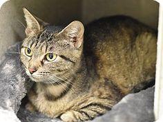 Luella - URGENT - Animal Care & Control Team of Philadephia in Philadelphia…