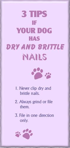 DRY AND BRITTLE DOG NAILS CAN BE A REAL PROBLEM. Here are some tips for trimming brittle dog nails, but do check with your vet that there is no infection or other health issue. Dog Grooming Tips, Brittle Nails, Dog Nails, Dog Care, Puppy Love, Your Dog, Conditioner, Health, Dogs