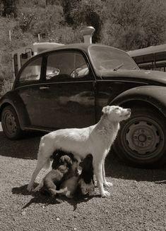 Traer Scott's  Images of Street Dogs - My Modern Metropolis