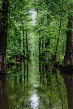 Spreewald - Germany / The Spreewald is crossed by countless rivers. In this area I could experience similar images. Beautiful, relaxing and memorable.