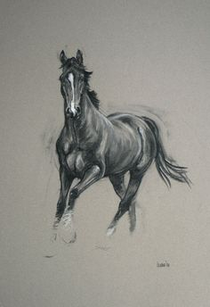 Beautiful Equine horse art LE print 'Alert' from an original charcoal and chalk by Heather Irvine individually signed and dated