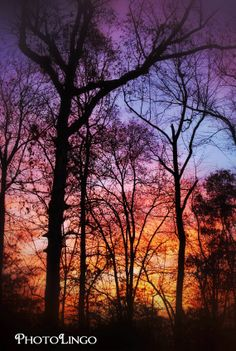 Fine Art Photography, Sunrise, Trees, Woods, Forest, Landscape Photography Print, Nature Photograph, Wall Decor, Wall Art, Sunrise Print www.etsy.com/shop/PhotoLingo
