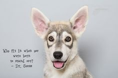 """Northern Inuit puppy: """"Why fit in when you were born to stand out?"""" - Dr. Seuss"""