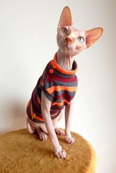 Fashion Maniac for Sphynx