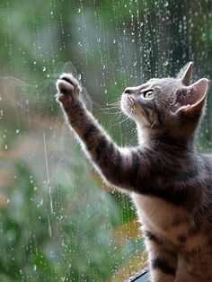 cat and rain on the window