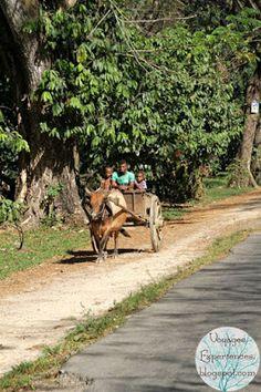 Voyages et Expériences dans les îles: Madagascar: Paysages et scènes de vie de Nosy Komba à Ankify, direction Ambanja