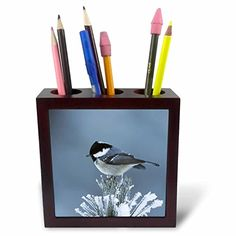 3dRose ph_84485_1 Coal Tit bird Swiss Stone Pine Switzerland  NA02 RNU0530  Rolf Nussbaumer  Tile Pen Holder 5Inch *** You can find out more details at the link of the image.