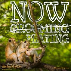 Take a break from your normally scheduled grooming and go see #MonkeyKingdom, in theatres now!