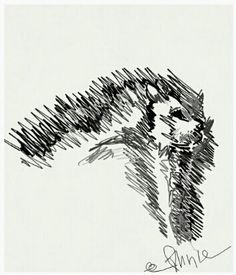 Een leeuw getekend met een Bamboo-pennetje / a lion drawed with a Bamboo-pencil