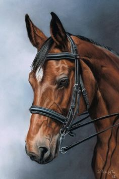 Sarah Leigh always welcomes Horse Portriats. Contact today to get magnificent portriat done of your magnificent animal Horse Drawings, Animal Drawings, Art Drawings, Beautiful Horses, Animals Beautiful, Horse Sketch, Horse Artwork, Horse Portrait, Carousel Horses
