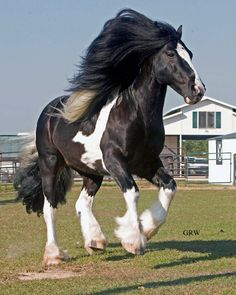 Lookit that mane, Fabio of the horsey set, love it