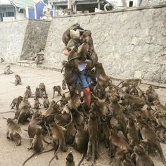 """My friend didn't believe the """"don't feed the monkeys"""" signs - Album on Imgur"""